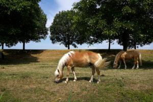 paarden_klein_profijt
