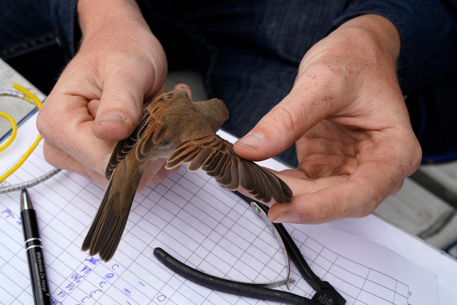 Vogelmeting