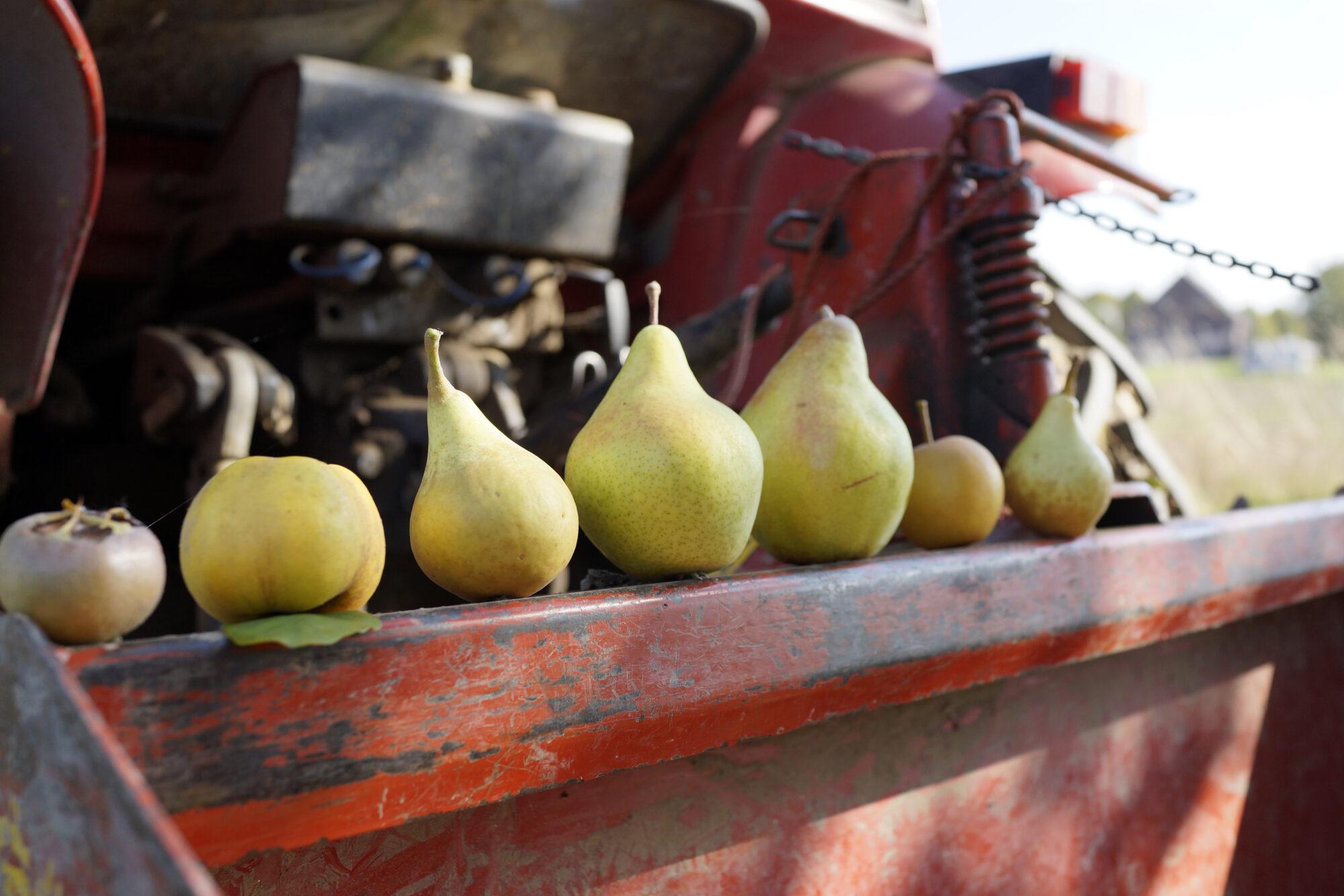 Historische fruitrassen