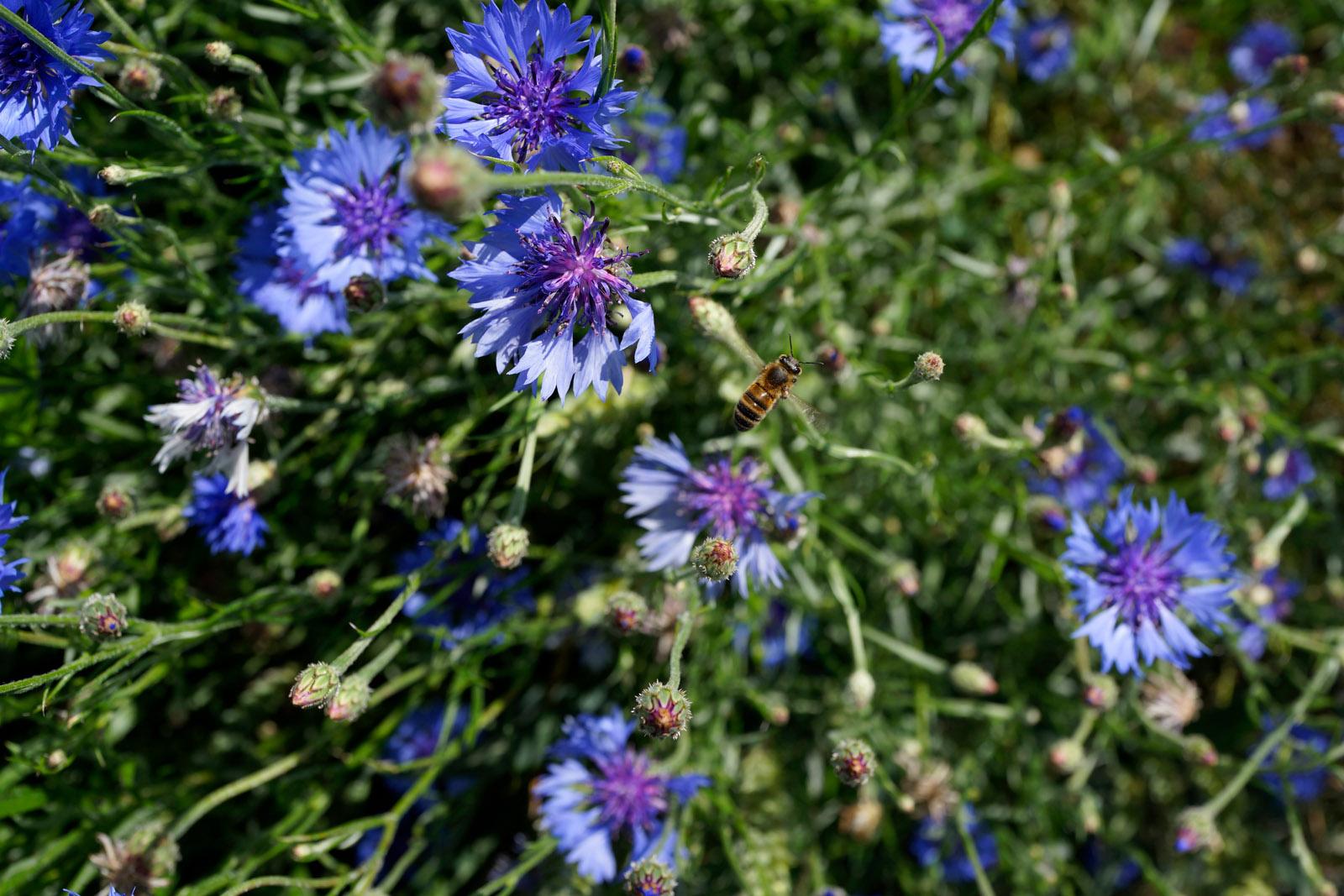 Bijenlessen
