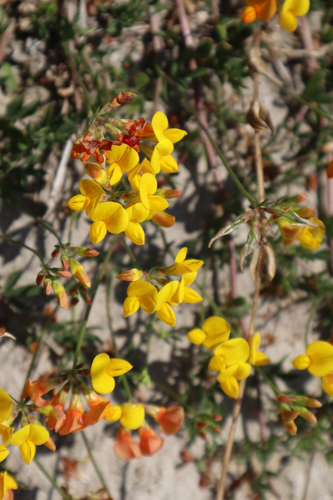 kruiden en bloemen