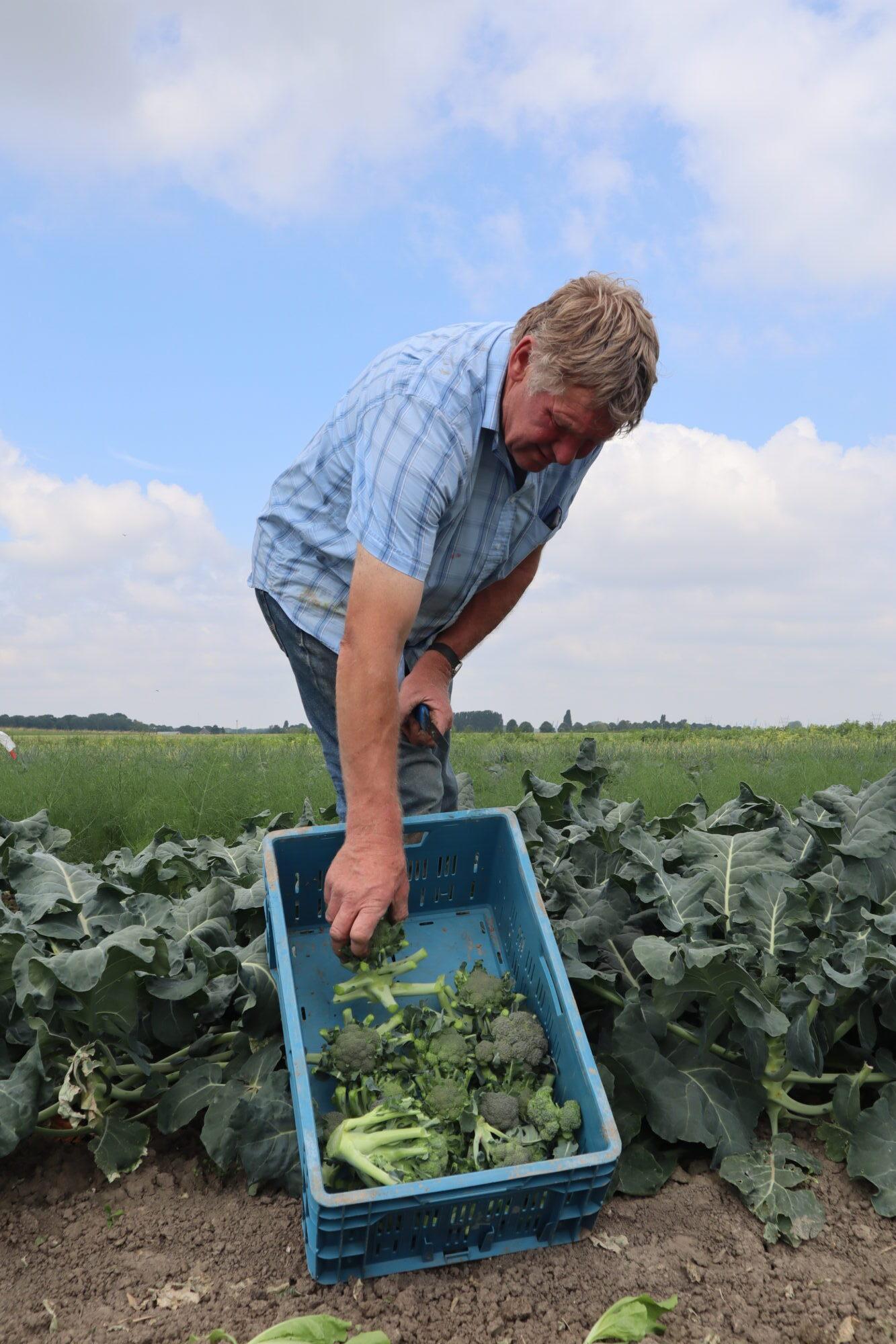 Broccoli Gert van Herk